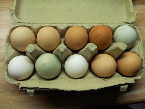 Eier vom Gartenfreund